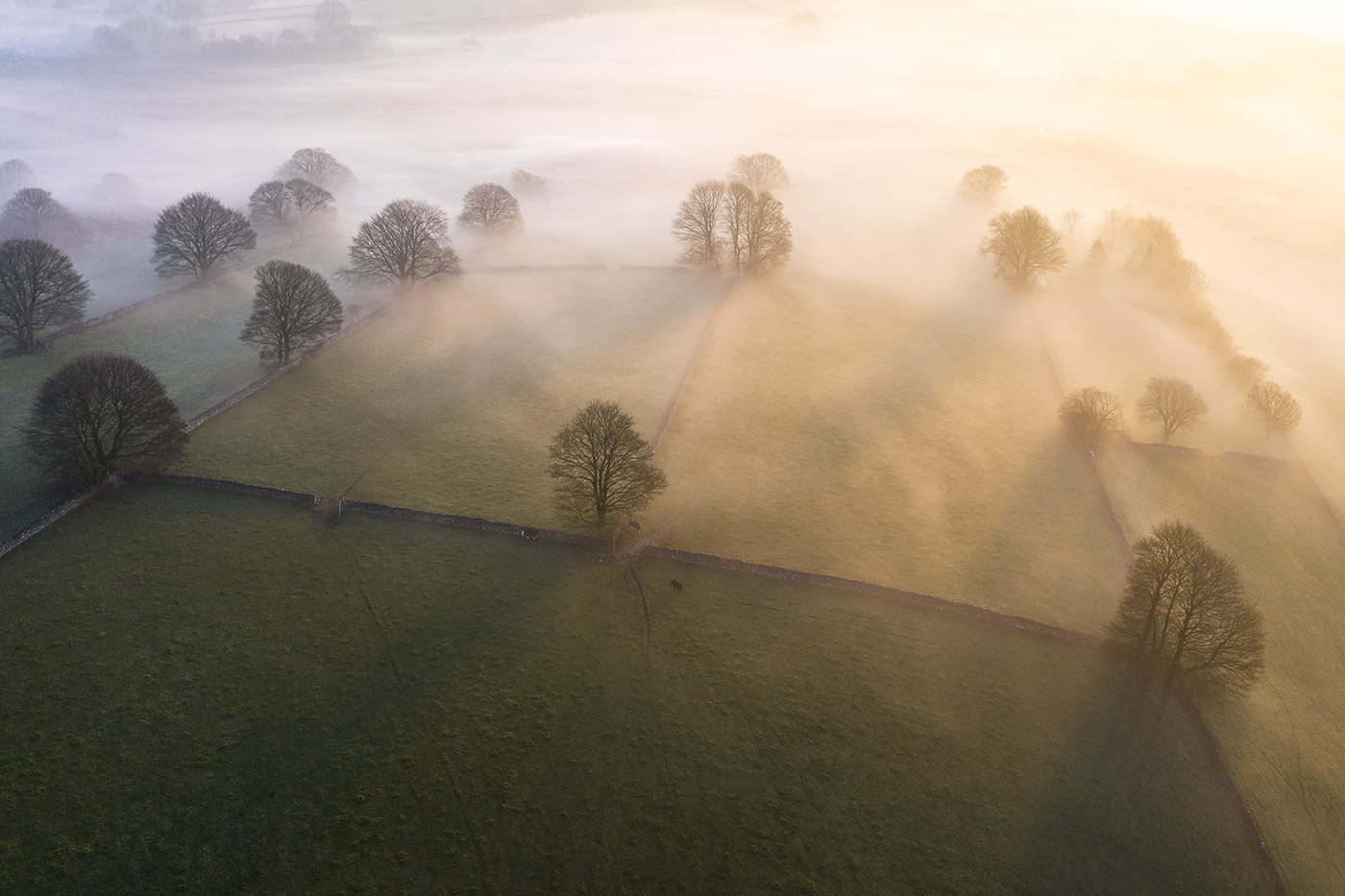 Jonathan Bean Photography Tree Peak District